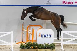 118, Nova<br /> KWPN Hengstenkeuring 2021<br /> © Hippo Foto - Dirk Caremans<br />  02/02/2021