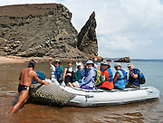 Travelers enjoy the beach via inflatable boat at Pinnacle Rock on Bartolomé Island, an icon of the Galápagos archipelago. This large black partially eroded lava formation was created when volcanic magma reached the sea and exploded into particles which fastened together into rock comprised of thin layers. Bartolomé Island (or Bartholomew Island, named after Lieutenant David Bartholomew of the British Navy) is one of the geologically younger islands in the Galápagos archipelago, just off the east coast of Santiago (James) Island. The volcanic Galápagos Islands (officially Archipiélago de Colón, otherwise called Islas de Colón, Islas Galápagos, or Enchanted Islands) are distributed along the equator in the Pacific Ocean 972 km west of continental Ecuador, South America. In 1959, Ecuador declared 97% of the land area of the Galápagos Islands to be Galápagos National Park, which UNESCO registered as a World Heritage Site in 1978. Ecuador created the Galápagos Marine Reserve in 1998, which UNESCO appended in 2001. For licensing options, please inquire.