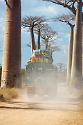 A local loaded transport vehicle driving down Avenue of the Baobabs, near Morondava, Madagascar