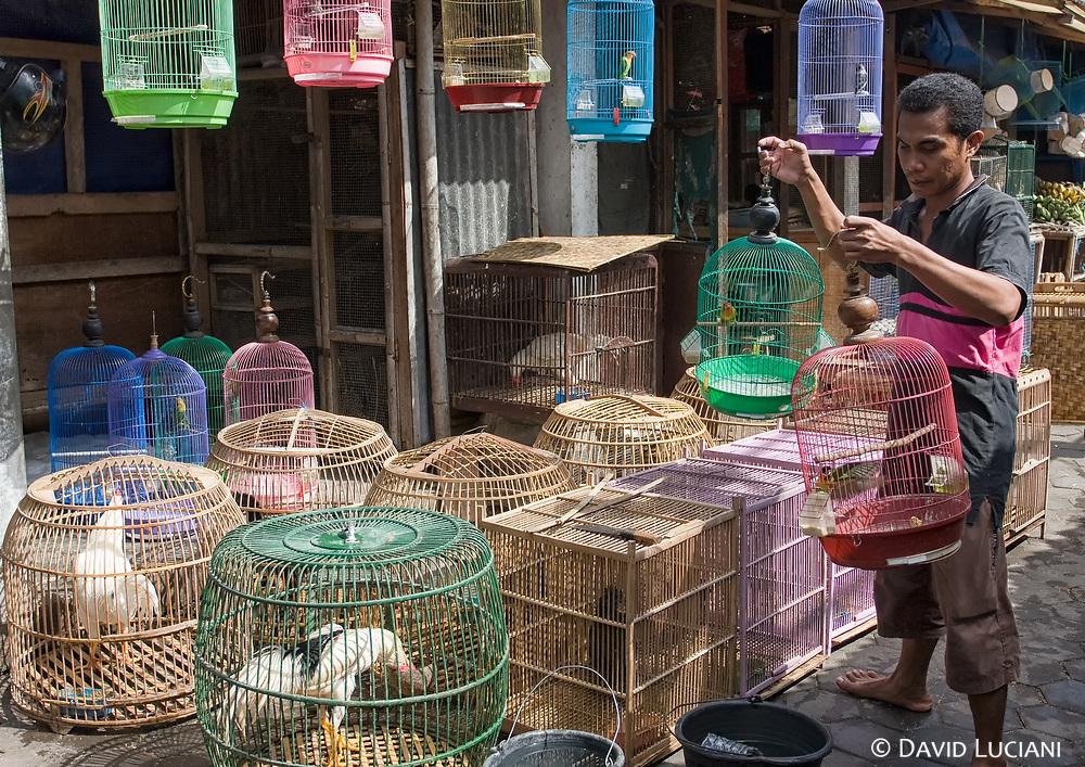 The Ngasem bird market. Yogyakarta's oldest market providing birds and other wild-caught animals kept in cages.