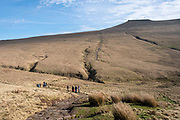 A group of adult and child ramblers walk along the path towards the summit of Pen Y Fan Mountain in Brecon Beacons National Park, Wales, Powys, United Kingdom. Pen Y Fan is the highest point in the Brecon Beacons hill and mountain range in South Wales. The National Park was established in 1957 due to the spectacular landscape which is rich in natural beauty.