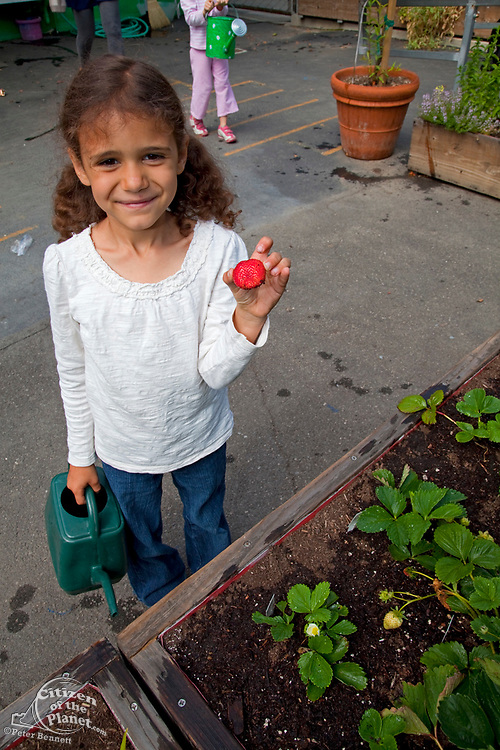 Young girl waters the strawberries at the Wonderland elementary school garden.