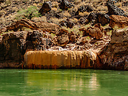 Pumpkin Spring is a geothermally-heated mineral water pool surrounded by bright-orange travertine on the shore of the Colorado River at Mile 212.9. Pumpkin Spring isn't safe for bathing or drinking due to high concentrations of arsenic, lead, and other minerals. Day 15 of 16 days rafting 226 miles down the Colorado River in Grand Canyon National Park, Arizona, USA.
