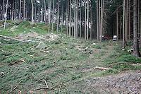 WOOD EXPLOITING. PICEA ABIES. NORWAY SPURCE.<br /> BRTNICKY HRADEK. CESKE SVYCARSKO. CZECH REPUBLIC.