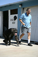 EXCLUSIVE 24th June 2008, Palm Springs, California. 76-year-old Cheeta, star of many Hollywood Tarzan films of the 1930s and 1940s, is coming out of retirement. Recognized as the oldest chimpanzee alive, the Palm Springs resident has just signed a record deal. To celebrate the signing, Cheeta made a promo music video to accompany his cover of the 1975 hit song 'Convoy'. Pictured at the 'Casa De Cheeta', in Palm Springs is Cheeta's owner Dan Westfall. PHOTO © JOHN CHAPPLE / www.johnchapple.com<br /> tel: +1-310-570-9100