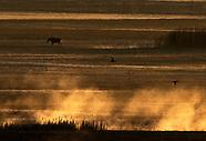 Straty przyrodnicze po pożarze w Biebrzańskim Parku Narodowym