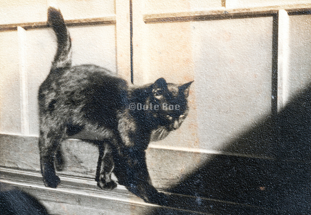 black and white old damaged photo with a domestic cat