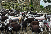 Sheep pen seen at Wasdale Head in Lake District NP, United Kingdom, Europe. England Coast to Coast hike with Wilderness Travel, day 3 of 14: from Wasdale Head to Seathwaite. From Wasdale Head, we climbed to 1637-foot Styhead Pass, then descended via Styhead Tarn to the valley of Borrowdale. Overnight at Keswick Country House, in Cumbria county. [This image, commissioned by Wilderness Travel, is not available to any other agency providing group travel in the UK, but may otherwise be licensable from Tom Dempsey – please inquire at PhotoSeek.com.]