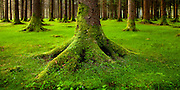 Gougane Barra Forest Park. County Cork, Ireland.