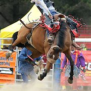 Ross Dowling from Hyde in action during the Open Saddle Bronc competition at the Southland Rodeo, Invercargill,  New Zealand. 29th January 2012