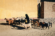 An old Nubian woman walking with her goats in Seheil Island
