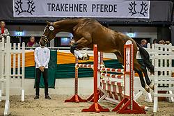 KopfNr. 17 SINATRA von Honoré du Soir X Herzruf<br /> Freispringen der Junghengste<br /> Neumünster - 58. Int. Trakehner Hengstmarkt 2020<br /> 16. Oktober 2020<br /> © www.sportfotos-lafrentz.de/Stefan Lafrentz