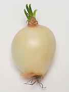 still life of a budding onion