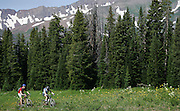 """Mountain bikers ride through a meadow on the upper portion of the 401 Trail in Crested Butte, Co. Aspen and Crested Butte are hours apart by car and probably worlds apart in attitude but only separated by 24 miles on a map. Many hikers are starting to take one of a number of mountain passes on foot and stay the night in the other town and then hike, bike, drive or fly back the following day. Depending on the route chosen and the ability of the hiker, it takes about 5 to 9 hours to hike between the two towns. Most hikers choose the trails that converge on 12,490-foot West Maroon Pass ? the shortest of the available options at 10.5 miles. The trail offers a steady uphill from either side, with ample time to prepare for the last steep and loose rocky sections before the pass.The historic Town of Crested Butte is a Home Rule Municipality located in Gunnison County, Colorado, United States. A former coal mining town now called """"the last great Colorado ski town"""", Crested Butte is a destination for skiing, mountain biking, and a variety of other outdoor activities.The Colorado General Assembly has designated Crested Butte the wildflower capital of Colorado..(Photo by MARC PISCOTTY / © 2006)"""