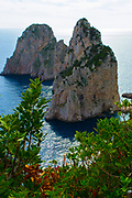 Faraglioni rock stacks off the coast of Capri island with bushes in the foreground.