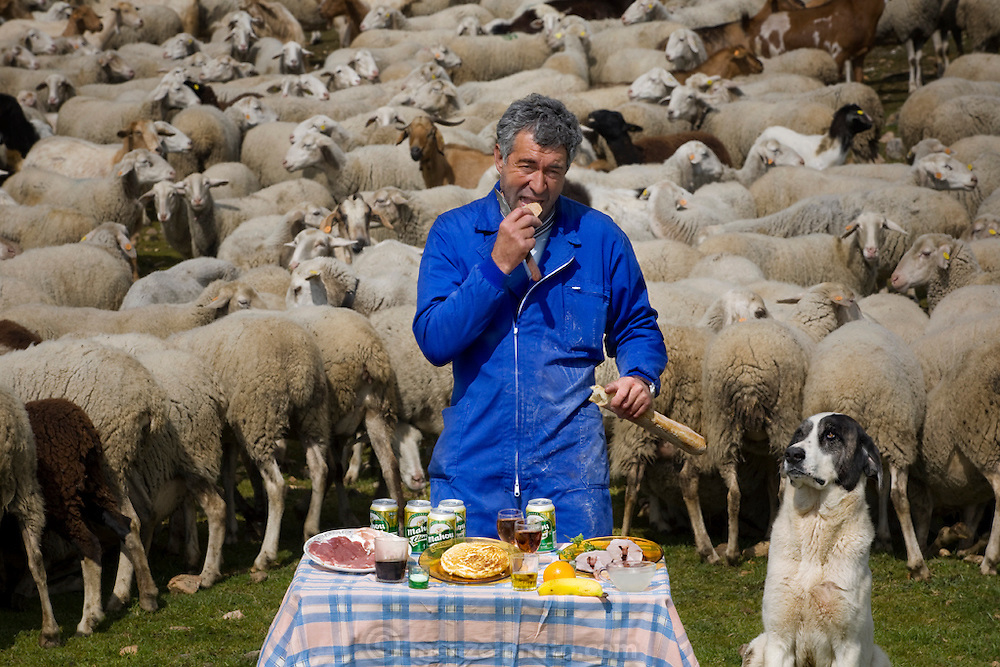 Miguel Ángel Martín Cerrada, a shepherd, with his typical day's worth of food, surrounded by his flock and sheep-herding mastiff in Zarzuela de Jadraque, Spain. (From the Book What I Eat: Around the Work in 80 Diets) MODEL RELEASED.