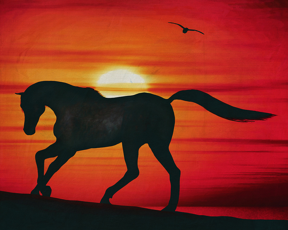 An arabian horse running loose on the beach in a beautiful red sunset. This coastal scene can be printed in different sizes and on different materials. Both on canvas, wood, metal or framed so it certainly fits into your interior. –<br /> -<br /> BUY THIS PRINT AT<br /> <br /> FINE ART AMERICA / PIXELS<br /> ENGLISH<br /> https://janke.pixels.com/featured/horse-at-sunset-on-the-beach-jan-keteleer.html<br /> <br /> <br /> WADM / OH MY PRINTS<br /> DUTCH / FRENCH / GERMAN<br /> https://www.werkaandemuur.nl/nl/shopwerk/Paard-bij-zonsondergang-op-het-strand/797496/132?mediumId=1&size=70x55<br /> -