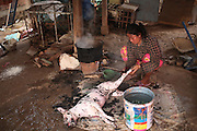 South East Asia, Cambodia, Phnom Penh. Dog is shaved and prepared for butchery<br /><br />Whilst some people eat dog meat, it is not commonplace. But it is a poorman's meat as it is a cheaper than beef, pork or chicken. The practice of hunting and catching stray dogs is common place, and sometimes even poaching domestic dogs. The Khmer prefer wild dog to 'farm' grown dogs. However the dogs are often treated inhumanely, and killed by strangulation or even boiled alive. It is thought by some that a dog filled with fear makes better meat. The animal is shaved and butchered. Favorite khmer dishes include dog paw curry and dog's head.<br /><br />Dog meat is eaten all over the world. An estimated 25 million dogs are eaten every year. For some societies eating dog is taboo, for others its acceptable.