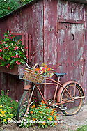 63821-22210 Old bicycle with flower basket next to old outhouse garden shed.  Red Wing Begonias, Zinnias, Snapdragons  (Antirrhinum sp.)  Marion Co., IL