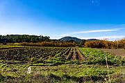 La Rural, organic fruit and vegetable farmers in Sant Cugat del Valles, Barcelona. La Rural, productors de fruites i hortalisses ecològiques a Sant Cugat del Valles, Barcelona. La Rural, productores de frutas y hortalizas ecológicas en Sant Cugat del Valles, Barcelona.