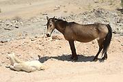 De Namibwoestijn of kortweg Namib wordt gezien als de oudste woestijn ter wereld. De ca. 200 kilometer brede zandwoestijn strekt zich uit van noord naar zuid langs de Atlantische kust van Namibië<br /> <br /> The Namib Desert or simply Namib is considered the oldest desert in the world. The 200 kilometer wide sandy desert stretches from north to south along the Atlantic coast of Namibia OP de foto: Wilde Paarden / Wild Horses