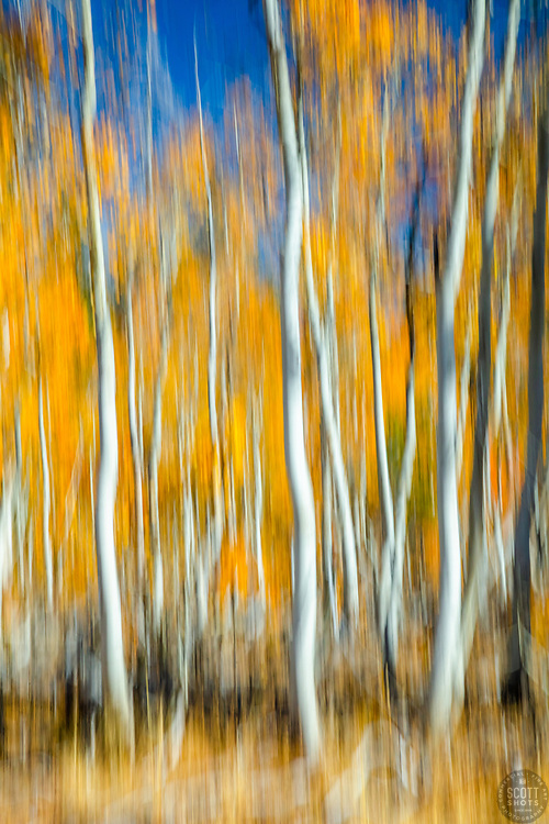 """""""Autumn Abstract 1"""" - Photograph of Aspen trees at Paige Meadows, near Lake Tahoe in the fall. The abstract effect is achieved by intentional camera movement while hand holding the camera."""