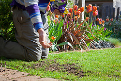 Repairing bare patches in the lawn with lawn seed