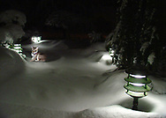 Rockville Centre, New York, U.S.  2003. Singapura cat Daisy wearing pink collar, sits by low front yard walkway light iin the snow at night. [Composite - cat was indoors]
