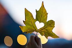 SYMBOLBILD - Herbst, Herbstblatt, Ahorn, Ahornblatt, Sonne, Sonnenstrahlen, Sonnenuntergang, Bergsee, Speicherteich, Berge, Natur, Herbstfarben, Jahreszeit, Jahreszeiten, November, Licht, Stimmung, Lichtstimmung, Herz, Herzform // Autumn, autumn leaf, maple, maple leaf, sun, sunrays, sunset, mountain lake, reservoir, mountains, nature, autumn colours, season, seasons, November, Light, mood, lighting mood, heart, heart shape. EXPA Pictures © 2020, PhotoCredit: EXPA/ Lukas Huter