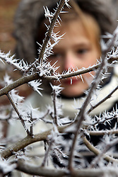 © Licensed to London News Pictures. 12/12/2012. Witney, Oxfordshire, UK. Annabel Hosegood (9) looking at frost crystals on a tree in the playground at the Batt School, Witney. Photo credit : Ric Mellis/LNP