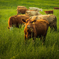 Gallery Collection: Agriculture Imagery