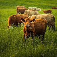 Livestock and Farm Animals