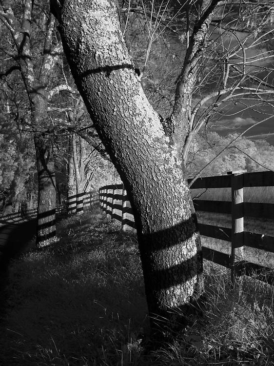 Shadows mimic the fence line on trees near a farm in Fluvanna County, VA. Photo/Andrew Shurtleff