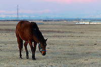 We went for an early morning drive to watch the setting moon at sunrise. After the show was over we stayed for awhile to watche these beautiful horses...©2010, Sean Phillips.http://www.Sean-Phillips.com