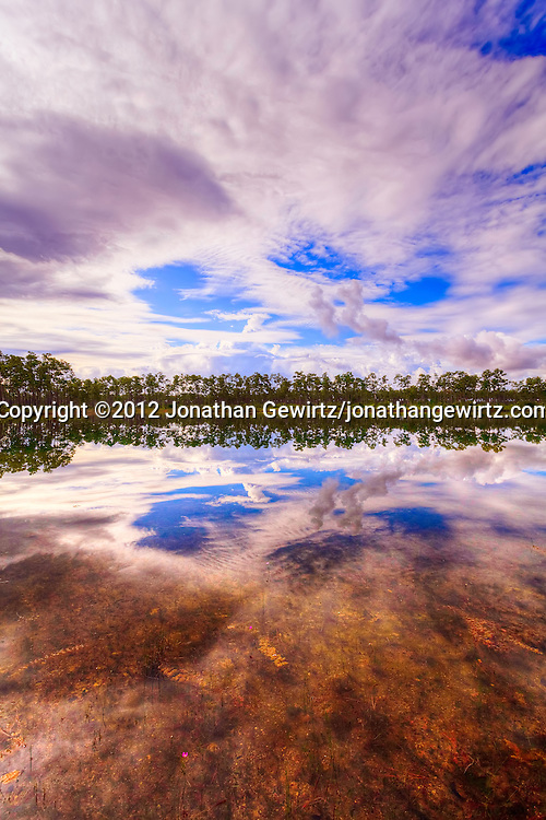 Early-morning view of the lake and rainy-season sky reflections at the Long Pine Key campground in Everglades National Park, Florida. WATERMARKS WILL NOT APPEAR ON PRINTS OR LICENSED IMAGES.