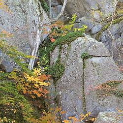 Plants growing on a cliff at the Great Ledge property in Gloucester Massachusetts USA