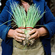 Silvia Afrim, a Romanian peasant farmer sells her bunches of spring onions at Bogdan Voda local market, Maramures, Romania.  90% of vegetable production is grown in small household plots and mainly used for self-consumption and for sale on local markets.