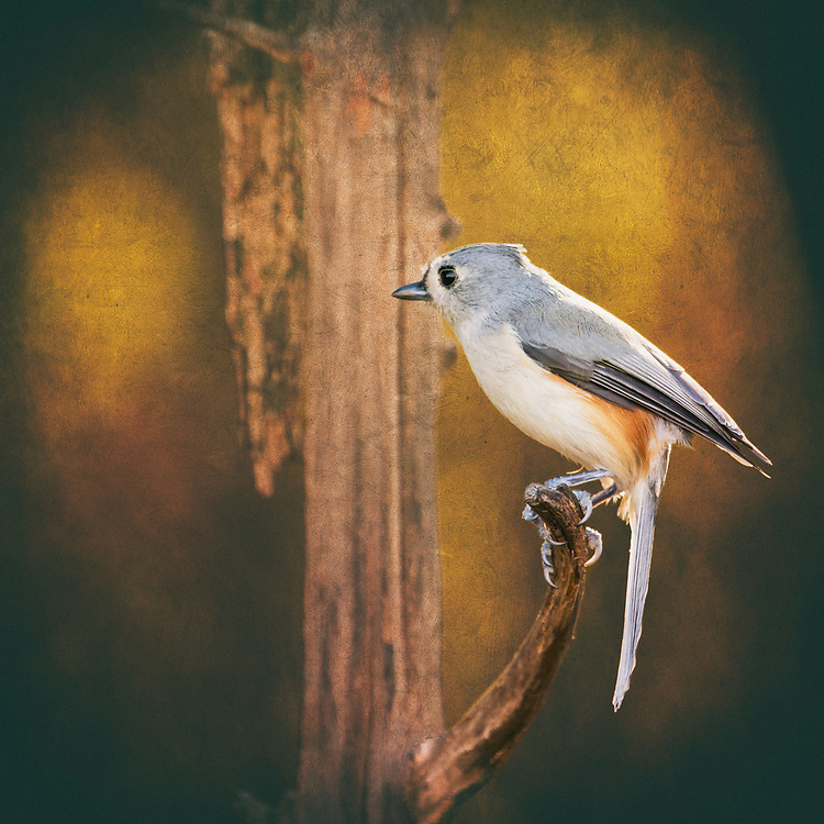 A Tufted Titmouse At Autumns End
