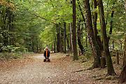 Nederland, Nijmegen, 30-10-2016Dit weekeind gaf prachtige herfstdagen.Mensen wandelen soms met hond of kinderwagen, door het kleurrijke bos. Een gehandicapte man in een scootmobiel rijdt op het bospad .FOTO: FLIP FRANSSEN
