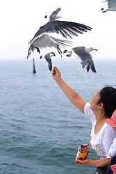 Feeding Sea Gulls