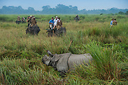 Asian elephant (Elephas maximus) & tourists & Indian rhinoceros (Rhinoceros unicornis)<br /> Kaziranga National Park<br /> Assam<br /> North East India<br /> UNESCO World Heritage Site<br /> ENDANGERED