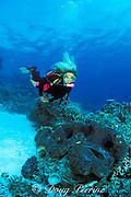 diver with giant clam,<br /> Tridacna gigas, MR 269<br /> Great Barrier Reef, Australia,<br /> ( Western Pacific Ocean / Coral Sea )