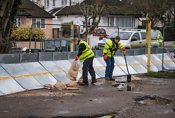 © Licensed to London News Pictures. 01/02/2021. Weybridge, UK. Workers installing flood defences along the river Thames at Weybridge in Surrey. Extra precautionis being taken because In 2014 Weybridge and the surrounding area was badly hit by flooding. Photo credit: Ben Cawthra/LNP