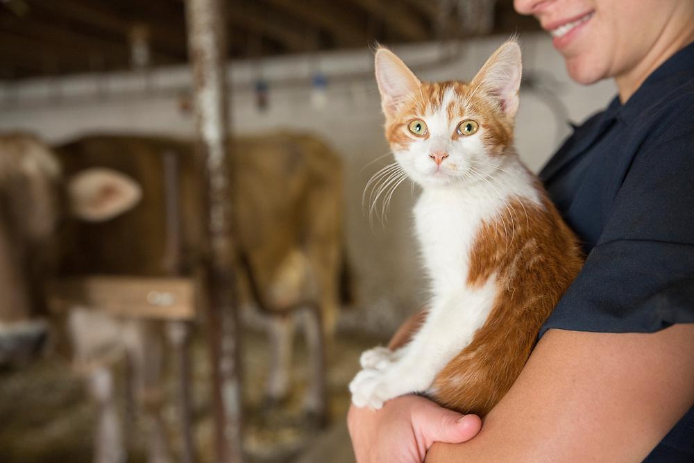 Orange tabby barn cat being held by woman