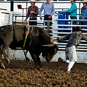 Red Eye Rodeo Buffalo at the Darby Broncs N Bulls event Sept 7th 2019.  Photo by Josh Homer/Burning Ember Photography.  Photo credit must be given on all uses.