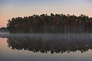 Rising sun paints the pine (Pinus sylvestris) tops on Purezers lake coast with ligth fog over it, near Puikule, Latvia Ⓒ Davis Ulands   davisulands.com