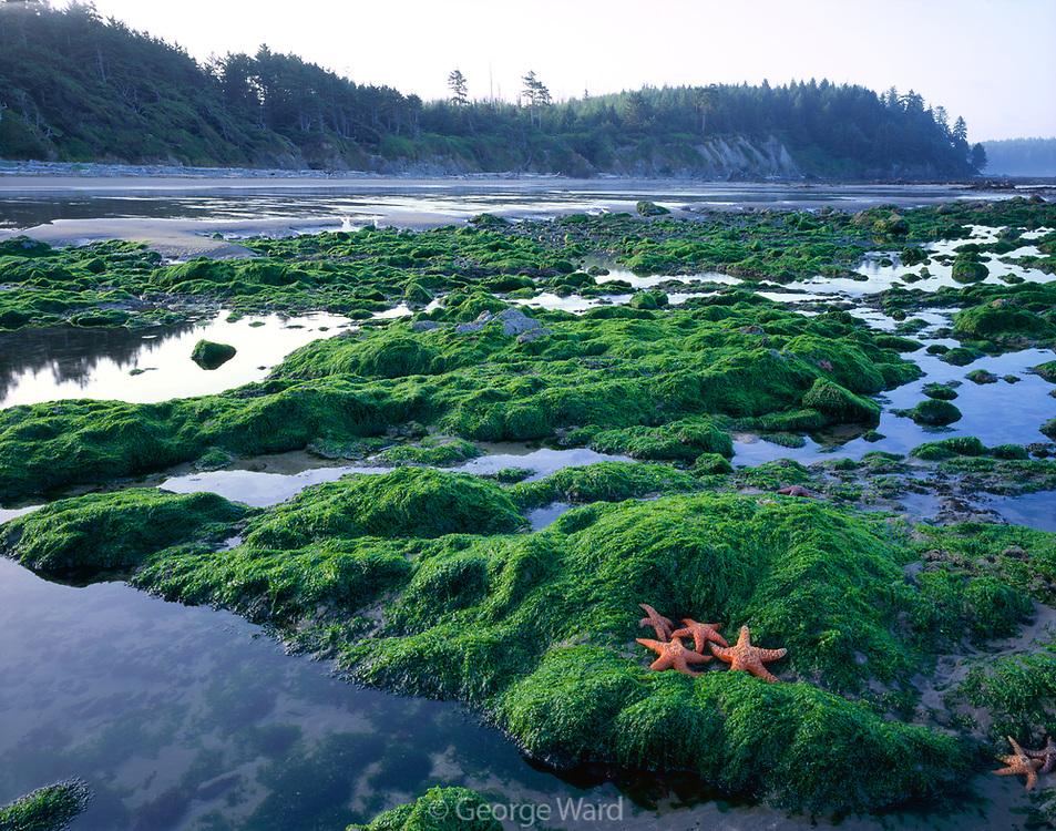 Sea Stars and Tidepools, Olympic National Park, Washington
