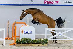 021, Naltic VDL<br /> KWPN Hengstenkeuring 2021<br /> © Hippo Foto - Dirk Caremans<br />  03/02/2021