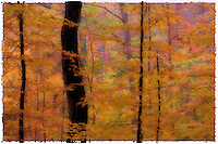 Beautiful fall foliage view of forrest on overcast day with watercoolor pastel effect.  Saturated colors of pink and orange and green with artistic edge.