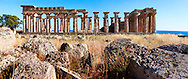 Fallen column drums of Greek Dorik Temple ruins  Selinunte, Sicily Greek Dorik Temple columns of the ruins of the Temple of Hera, Temple E, Selinunte, Sicily .<br /> <br /> If you prefer to buy from our ALAMY PHOTO LIBRARY  Collection visit : https://www.alamy.com/portfolio/paul-williams-funkystock/selinuntetemple.html<br /> Visit our CLASSICAL WORLD HISTORIC SITES PHOTO COLLECTIONS for more photos to buy as buy as wall art prints https://funkystock.photoshelter.com/gallery-collection/Classical-Era-Historic-Sites-Archaeological-Sites-Pictures-Images/C0000g4bSGiDL9rw